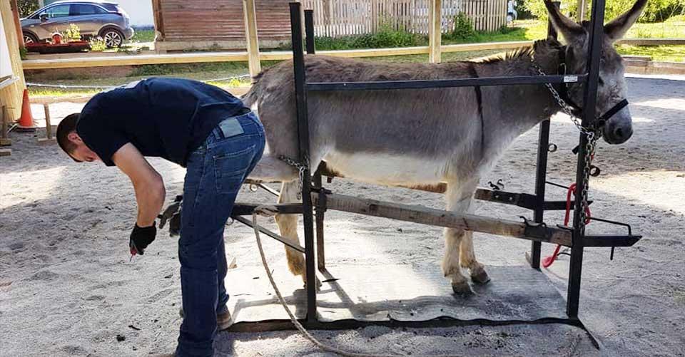 Service de parage d'ânes